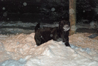 Sadie in snow