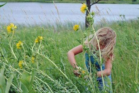 Picking sun flowers