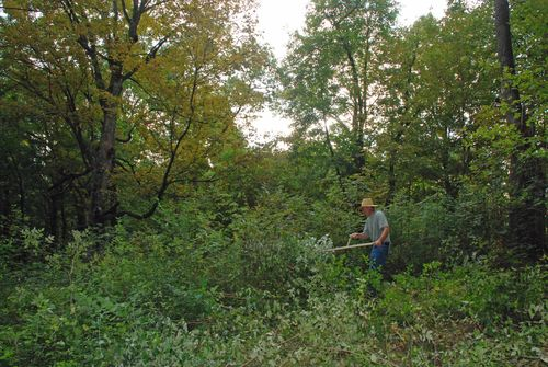 Clearing the brush