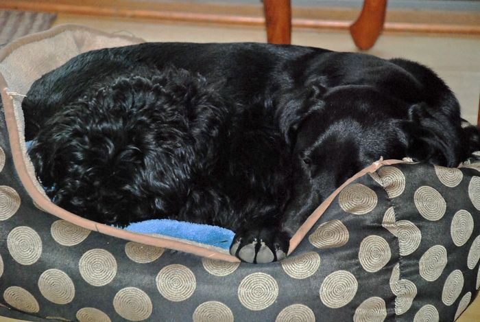 Sleeping max and bailey