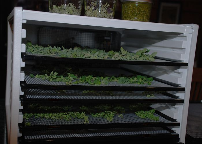Drying the herbs