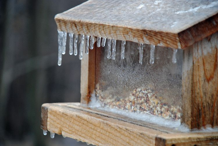 Icy bird feeder