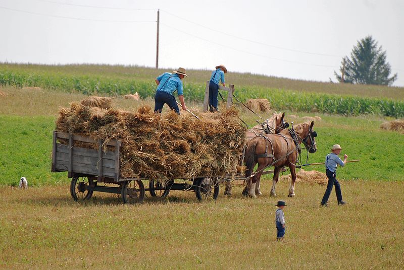 Amish workers