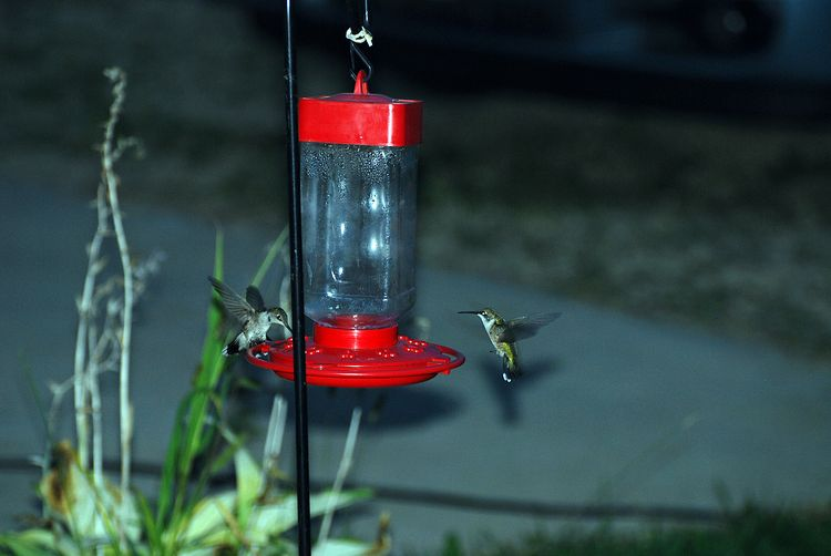 2 hummers