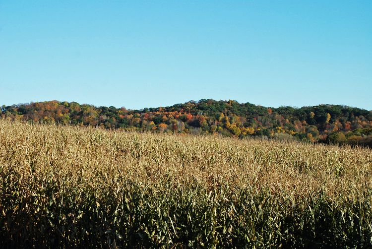 Hills and corn